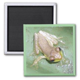 Froglet magnet