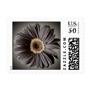 dark daisy postage stamps  in association with Zazzle.com