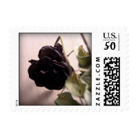 dried rose postage stamps  in association with Zazzle.com
