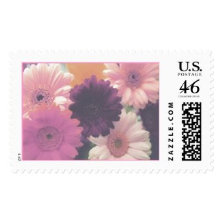 Pretty in Pink Stamp (Blank) stamp
