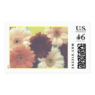 Summer Morning Daisy Stamp (Blank) stamp