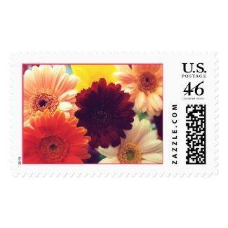 Vibrant Daisies Photo Stamp stamp